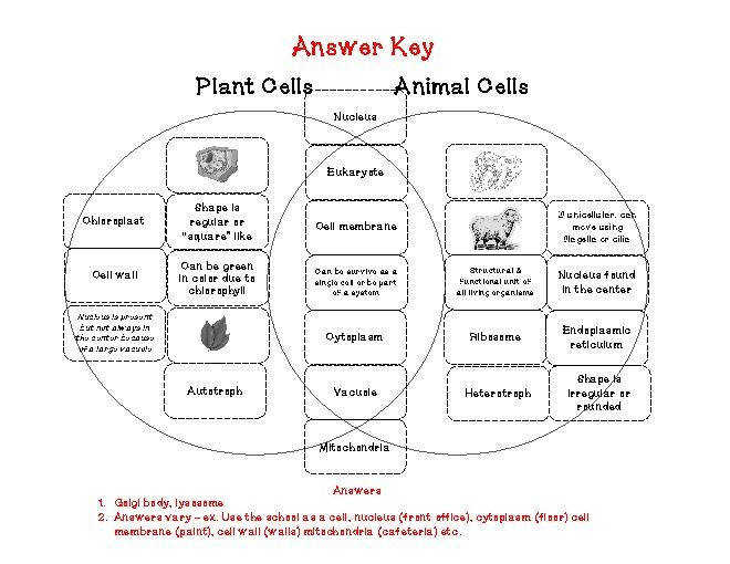 Degree Plant And Animal Cell Worksheet Answers Worksheets