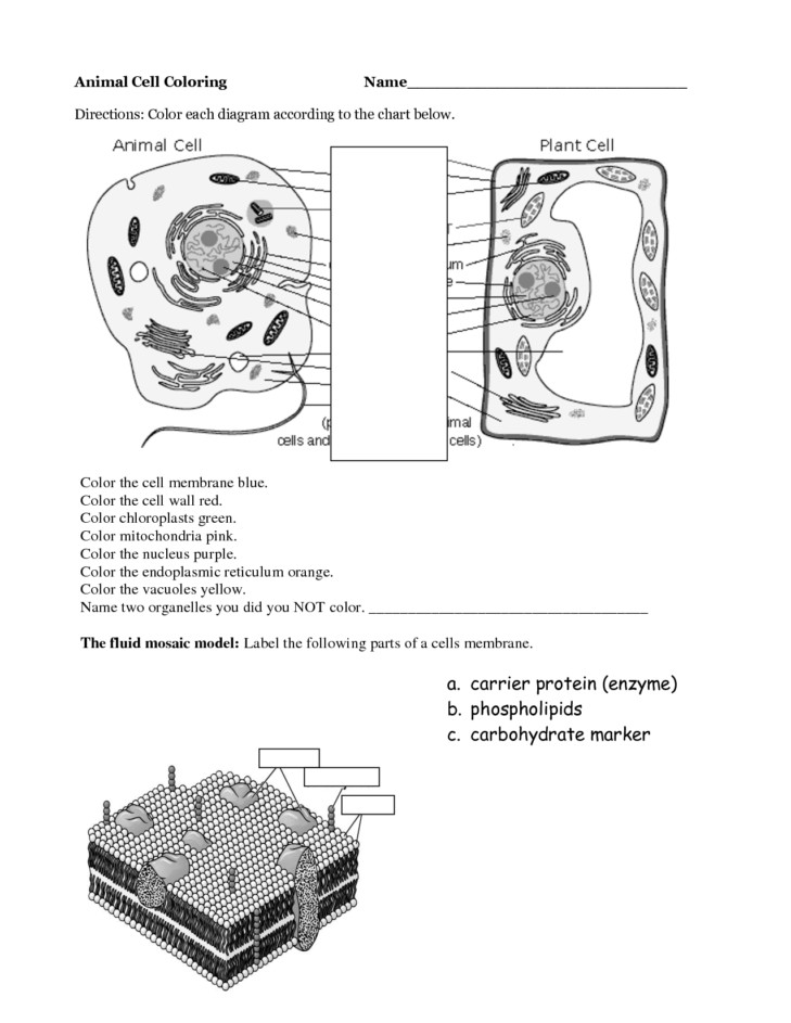 Medium Size of Worksheet difference Between Plant Cell And Animal Cell For Class 9 Plant