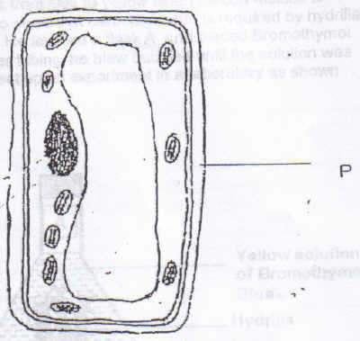 The diagram below is a plant cell