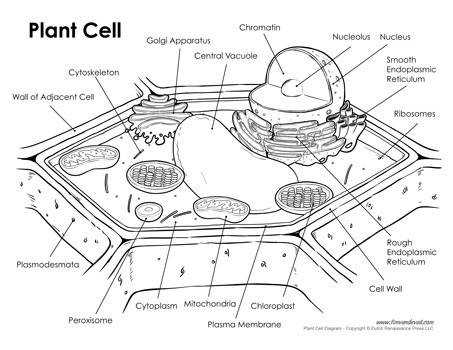 Printable cell diagram worksheet auto electrical wiring diagram printable cell diagram worksheets download wiring diagrams u2022 rh wiringdiagramblog today basic animal cell diagram typical animal cell diagram labeled ccuart Gallery