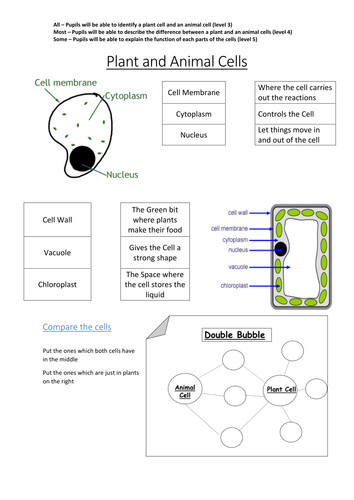 Plant and Animal Cells to label DIFFERENTIATED X 3 by Rachel1010Rachel Teaching Resources Tes