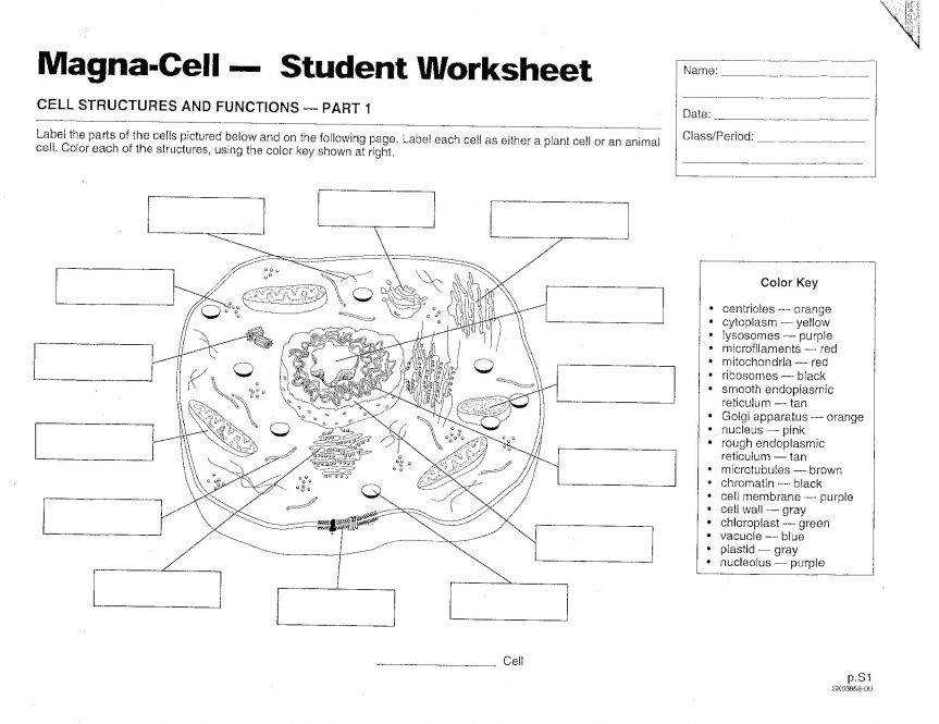 Coloring Pages Download File Animal And Plant Cell Coloring Worksheet Answers Label Color Define