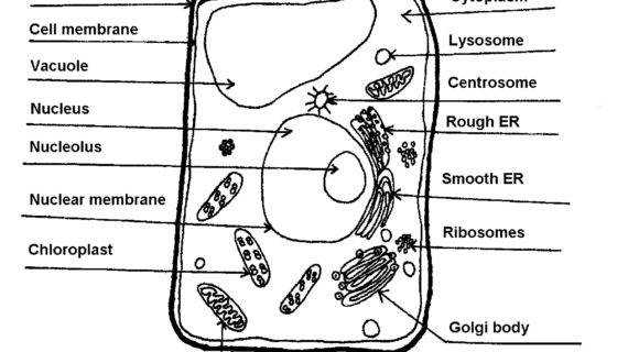 Download by size Smartphone Medium Size Original Size · Plant Cell