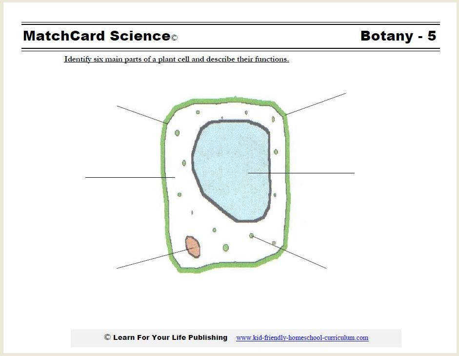 plant cell worksheet