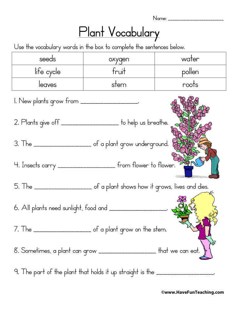 Plant Vocabulary Worksheet