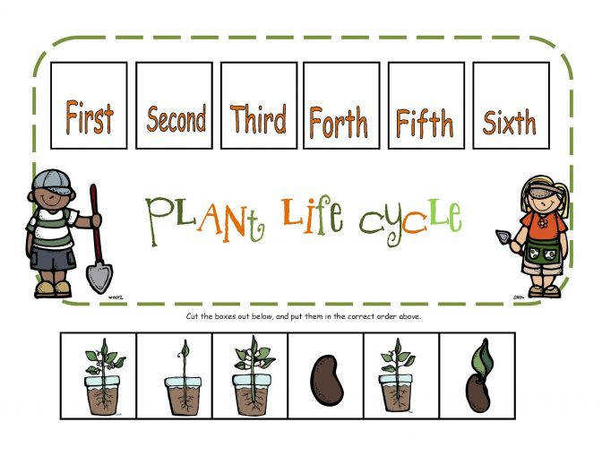 Preschool Printables Plant Life Cycle Printable Science Plants C6df0fe352d2de7a90ee d9 Frog Life Cycle Lesson Plan Lesson Plan