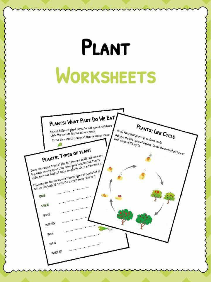 Download the Plant Worksheets