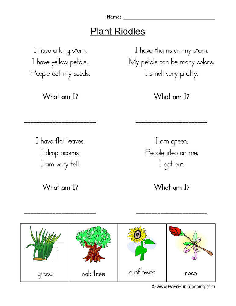 Plant Riddles Worksheet