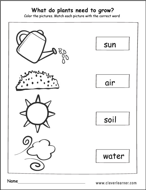 What do plants need to grow activity worksheet for children