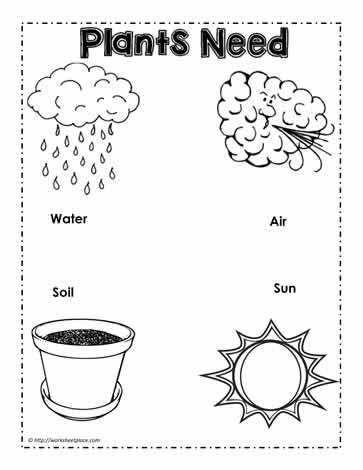 Parts of a Plant Worksheets Parts of a plant worksheets label the plant science worksheets