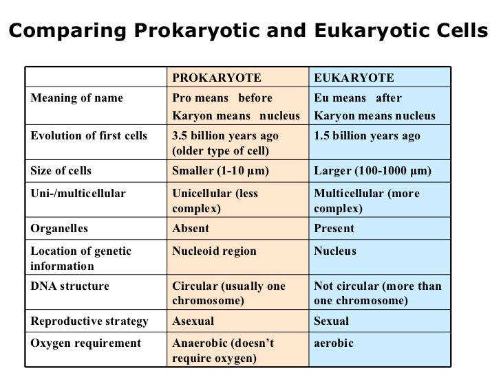 Prokaryotic and Eukaryotic Cells Worksheet | Homeschooldressage.com