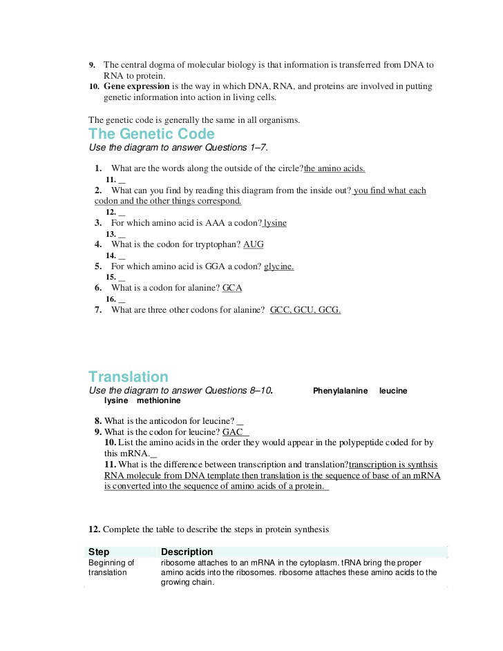 Protein Synthesis Worksheet Answer Key ...