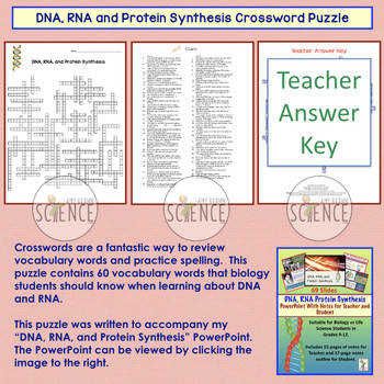 DNA RNA Protein Synthesis Crossword Puzzle
