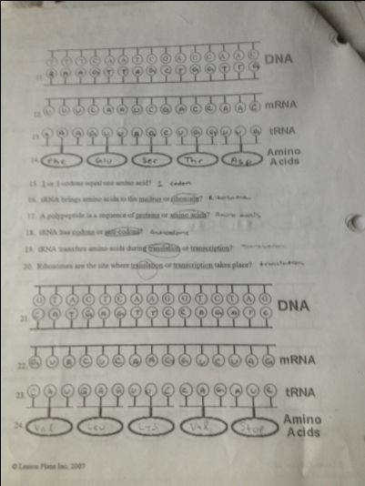 Protein Synthesis Worksheet Dna Rna Protein Synthesis Worksheet Answers Khafre With From Wallpapertest