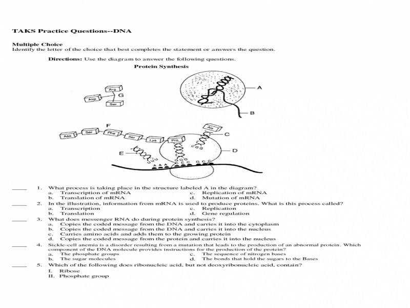 Diagram Protein Synthesis Practice 1 Illustration Of Wiring Diagram