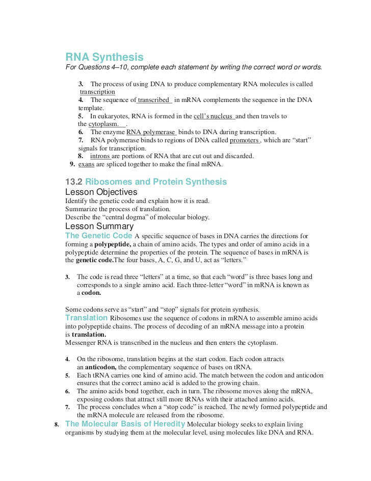 Stratton Lorraine DNA RNA · synthesis worksheets Elleapp · Protein Synthesis Worksheet Answer