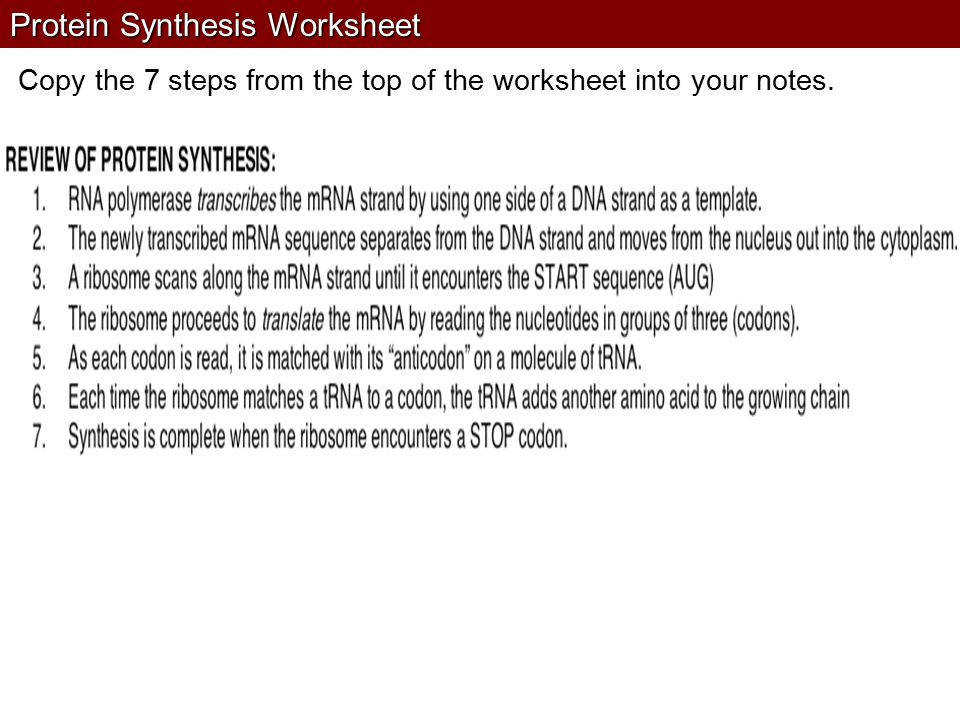Protein Synthesis Practice Worksheet From Dna To Rna Biology Do You Remember What Proteins Are Made