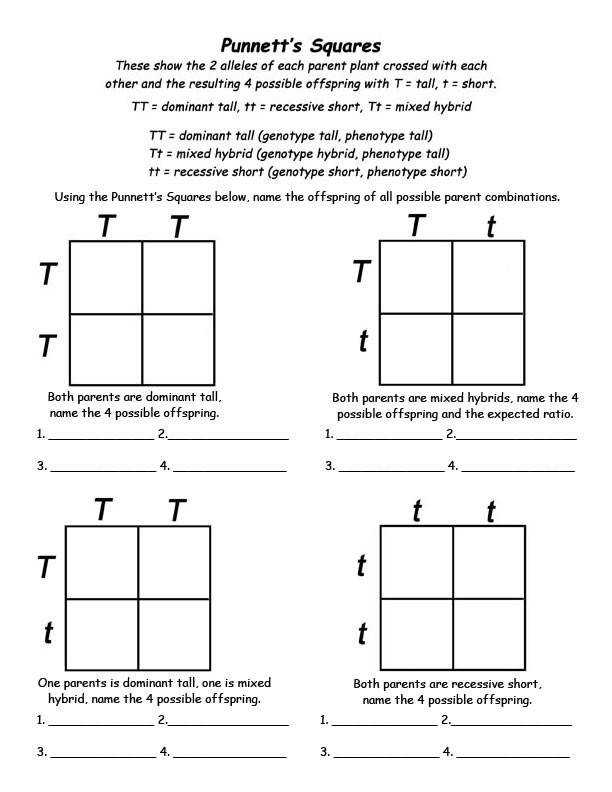 Punnett Square Practice Worksheets with Answer by The Science