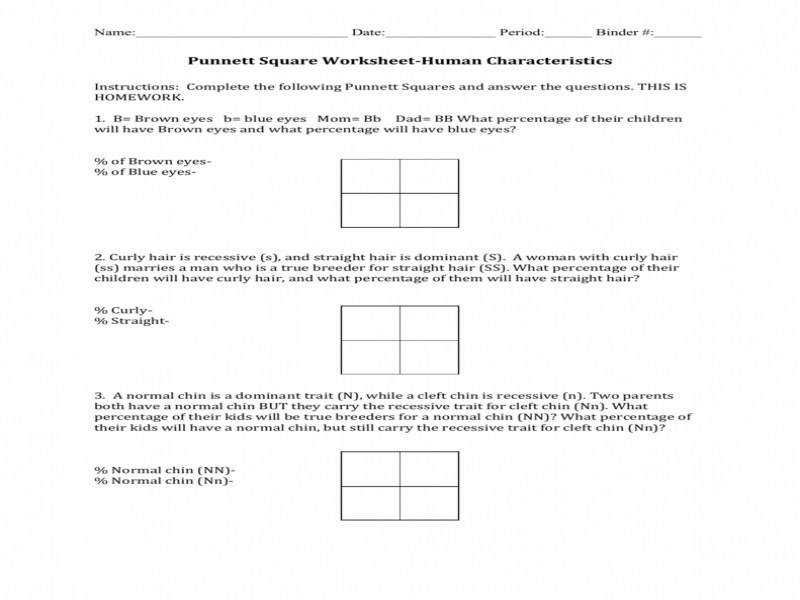 Punnett Square Worksheet Homeschooldressage Com