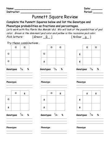 Knowledge Smart Basic Punnett Square Worksheet Answers Basic Punnett Square