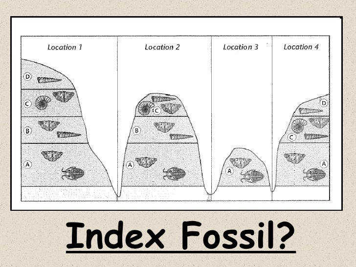 fossils and relative dating worksheet answers