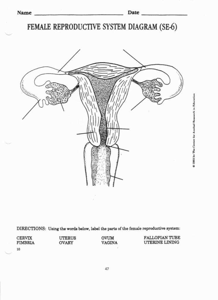 Female Reproductive System Worksheet Mstinsonbc 3 3 Female Reproductive System Worksheet