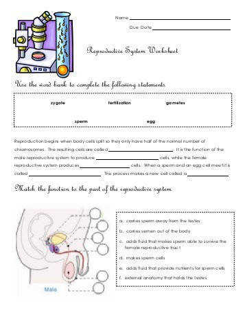Reproductive System Worksheet Use the word bank to plete the