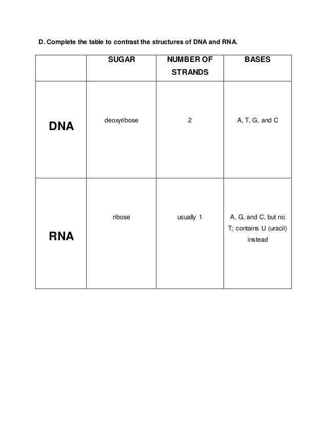 SUGAR NUMBER OF STRANDS BASES DNA RNA 10