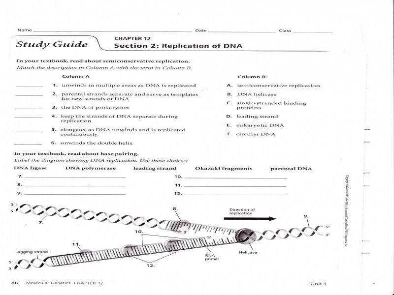 Rna Structure Notes 6 Rna Worksheet
