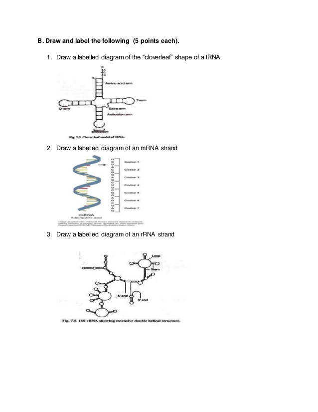 rna worksheet 4 638