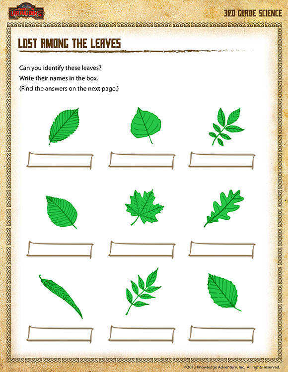 Lost among the Leaves Printable Science Worksheets