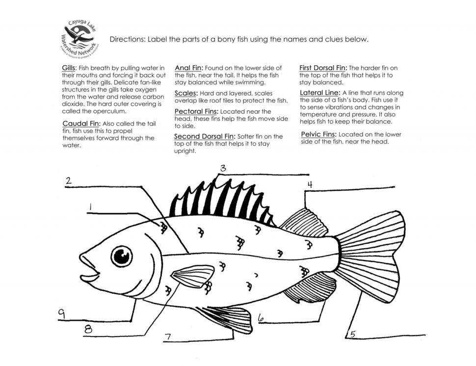 Size of Worksheet simile And Metaphor Worksheet 4th Grade Fishing For Figurative Language Answers