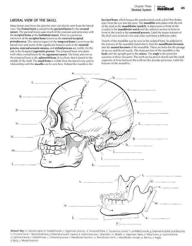 skeletal system coloring pages anatomy coloring book chapter answers worksheets the skeletal system worksheet answer key