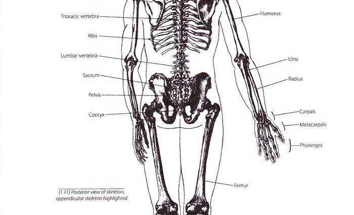 Gallery of Basic of Human Skeletal System