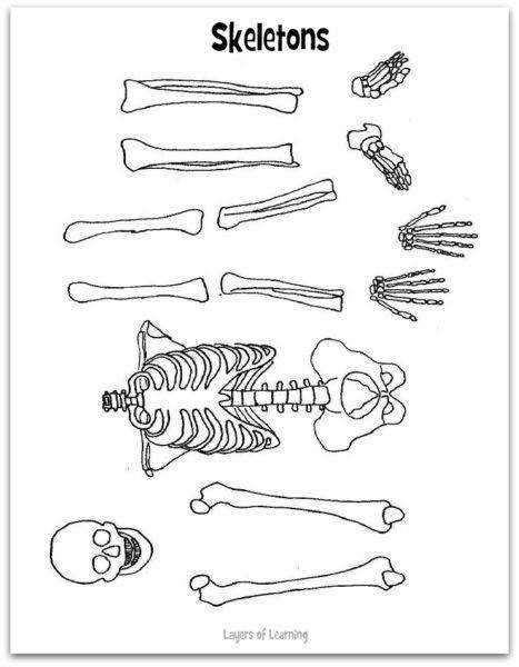 skeleton worksheet