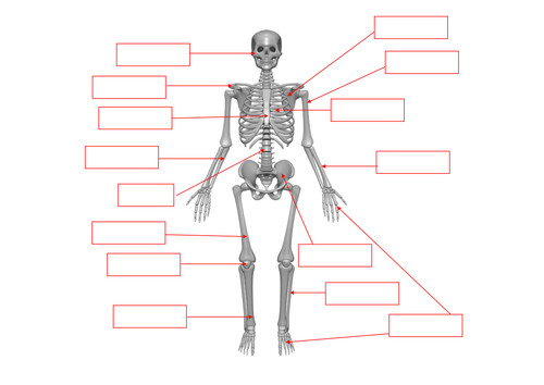 Skeleton bones labelling worksheet by benmarshall939 Teaching Resources Tes