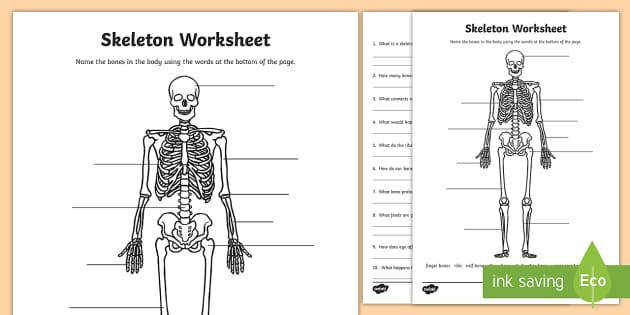 Skeleton Activity Sheet mon Names