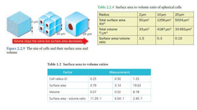 "4 YOUR TURN o plete the worksheet ""Calculating simple surface area to volume"
