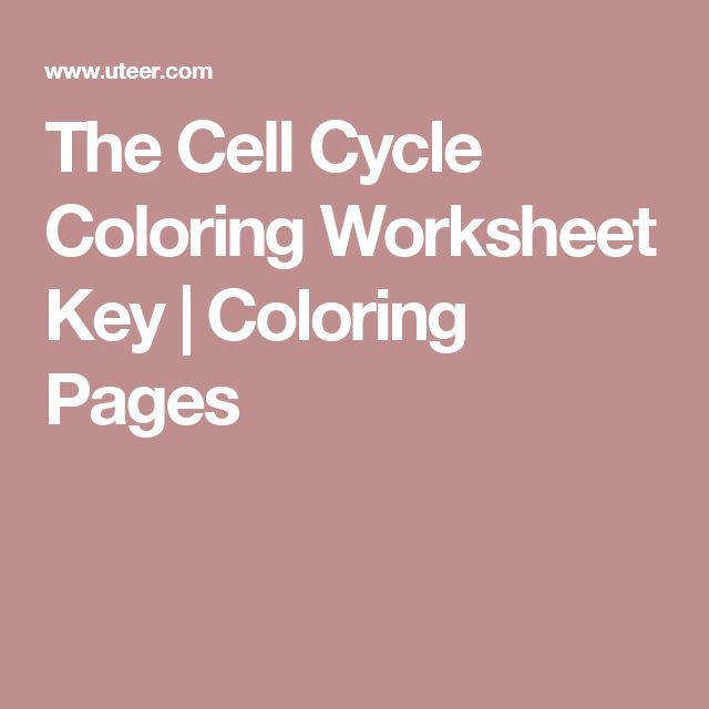 The Cell Cycle Coloring Worksheet Key
