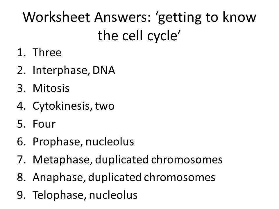 Worksheet Answers ting to know the cell cycle