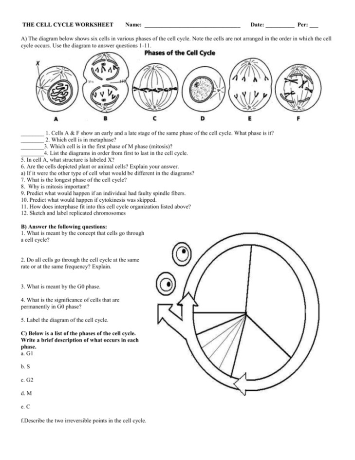 Medium Size of Worksheet cell Membrane Coloring Worksheet Answer Key The Cell Cycle Review Worksheet