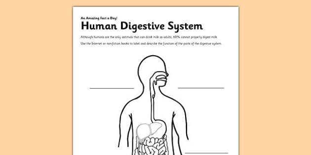Human Digestive System Activity Sheet digestion digestive system human label worksheet