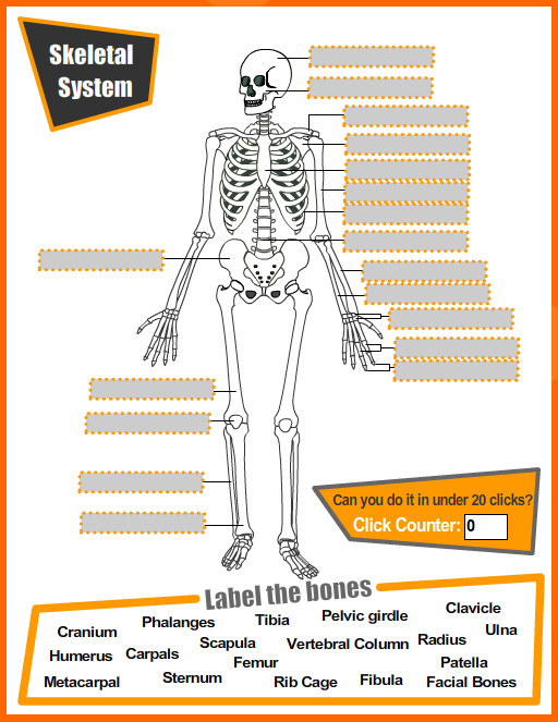 Skeletal System Quiz Worksheet