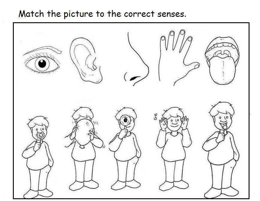 Free 5 senses worksheet for kids