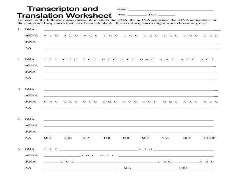 Transcription Translation Worksheet Worksheets