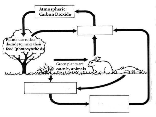 Worksheets The Nitrogen Cycle Worksheet Answers the nitrogen cycle worksheet answers pixelpaperskin carbon and worksheet