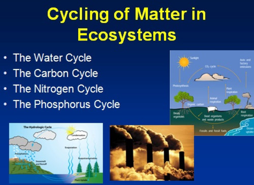 Cycling of Matter in Ecosystems Lesson PowerPoint Lesson and Activity Package by TeachWithFergy Teaching Resources Tes