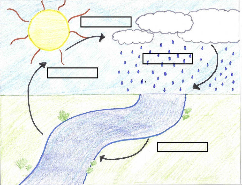 17 Best images about water cycle on Pinterest